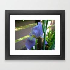 Hybrid Iris Framed Art Print