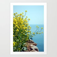 Rape Flowers 1 Art Print