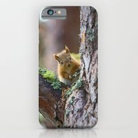 iPhone & iPod Case featuring Baby Red Squirrel  by Julian Clune