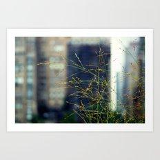 Wisps of Weeds in the City Art Print