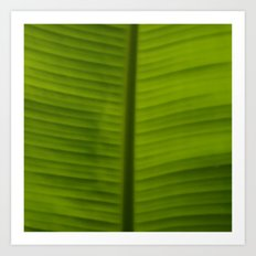 A Green Leaf Art Print