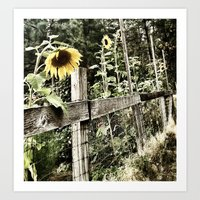 Caged Sunflowers Art Print