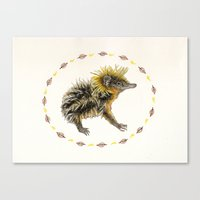 The Lowland Streaked Tenrec Canvas Print