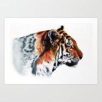 Sumathra Tiger Art Print