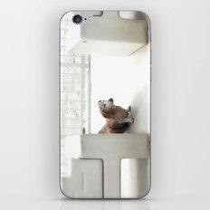 Dachshund, Carlsbad, California iPhone & iPod Skin