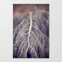 December's Anatomy Canvas Print