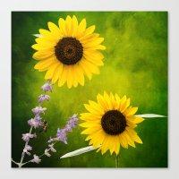 Sunflowers.  Canvas Print