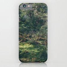 In the woods iPhone 6 Slim Case