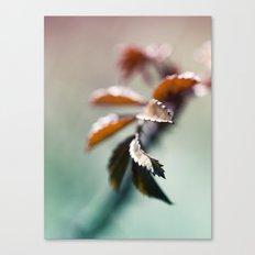 nature colors Canvas Print