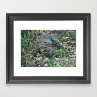 Cayman Iguana Framed Art Print