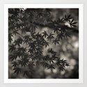 Japanese Maple 04 Art Print