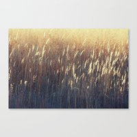 Amber Waves No. 2 Canvas Print