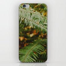 Fern iPhone & iPod Skin