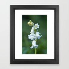 WHITE BLUEBELL Framed Art Print