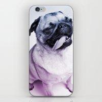 color pug iPhone & iPod Skin