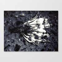 dead beatiful flower 2 Canvas Print