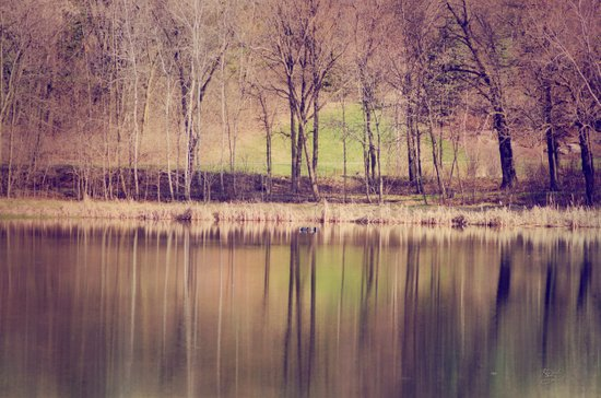 Spring Reflected Art Print