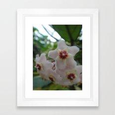 Hoya Framed Art Print