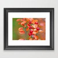 Autumnal Cotoneaster 93… Framed Art Print