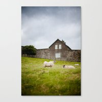 Sheep Blown By The Wind Canvas Print