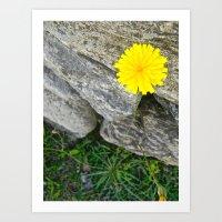 Vermont Dandelion Art Print