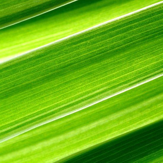 green grass IV Art Print