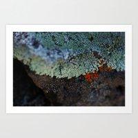 Lichen Ice Art Print
