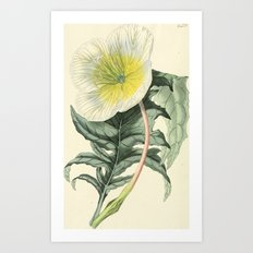 1479 Art Print