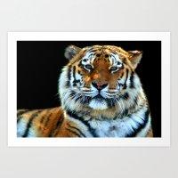 Sumatran Tiger - Panther… Art Print
