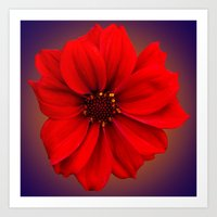 Red dahlia-bishop-of-llandaff Art Print