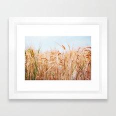 Golden Summer Framed Art Print