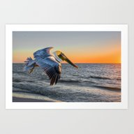 Sunset Pelican Art Print