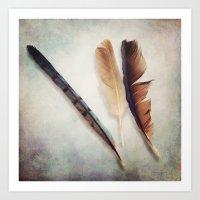 Feather Study III Art Print