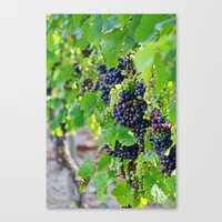Newport Vineyards Canvas Print