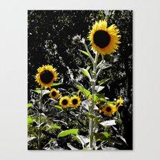Sun Flowers Canvas Print