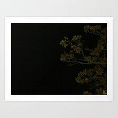Branches at Night Art Print