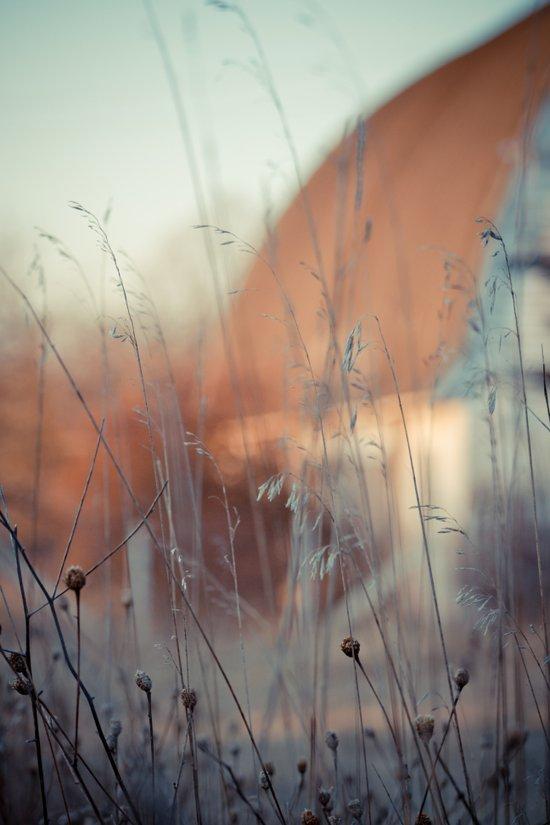 Grains and Grass. Art Print