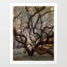 Florida Tree Art Print