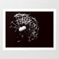 Dandelion Black & White Art Print