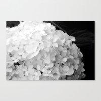 White flowers no.2 Canvas Print