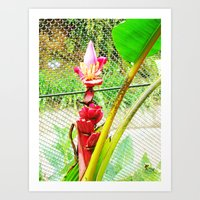 Tropical Petals Art Print