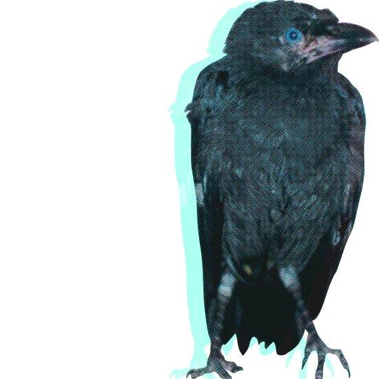 Half Tone Crow Art Print