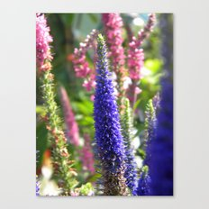 Tall Violet Flower  Canvas Print