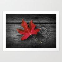 Fallen Red Maple Leaf On… Art Print