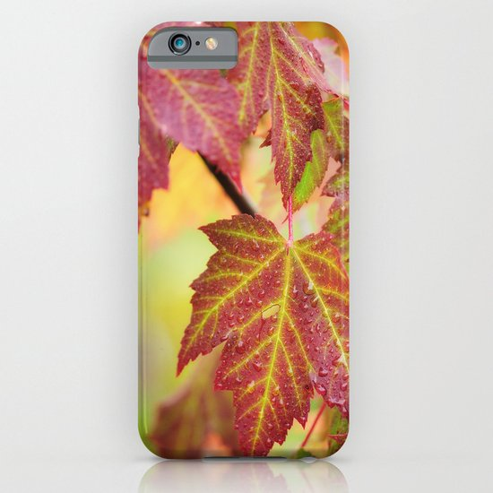 Maple Leaves iPhone & iPod Case