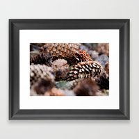Depth Of Field Pine Cone… Framed Art Print