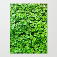 Canvas Print featuring Greenery  by rachellam