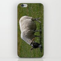 Sheep Baaaaa... iPhone & iPod Skin