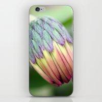 Sweet Baby Daisy iPhone & iPod Skin