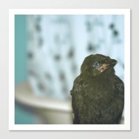 Bathroom Crow Canvas Print